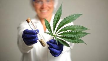 Doctors and Marijuana